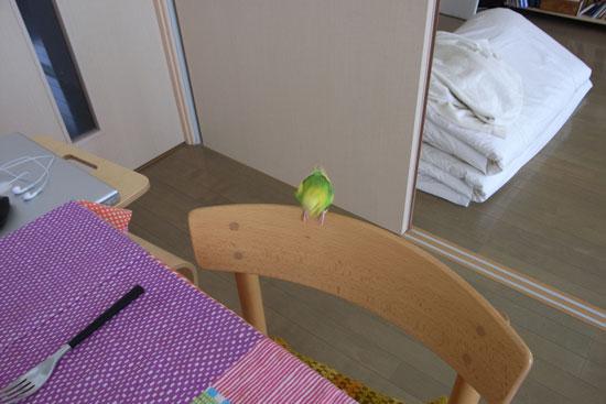blog_bird1_1