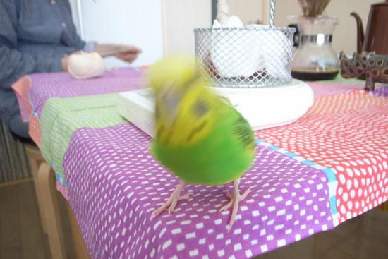 blog_bird1_2
