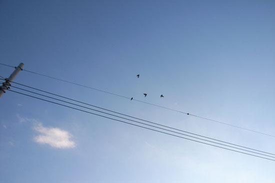 blog_bird_world_7