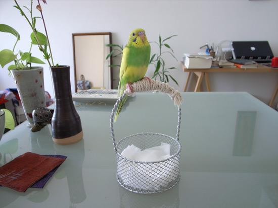 blog_torikai1_1