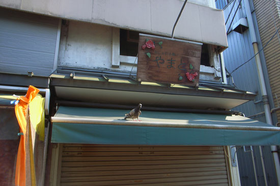 birdworld4_6